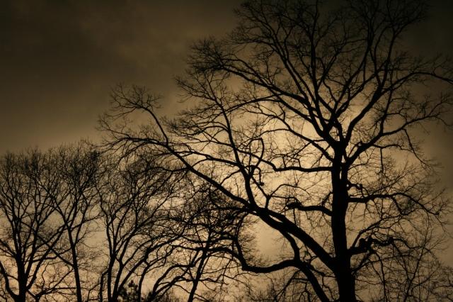 Stormy Sky, just before hail, Clark Park, Philadelphia